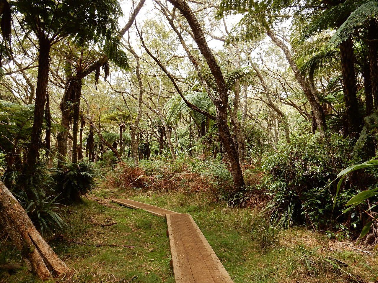 foret primaire sur l'ile de la Réunion