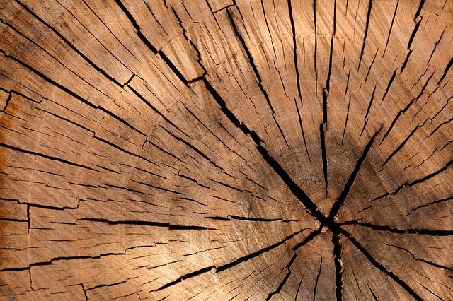 ecorce-arbre